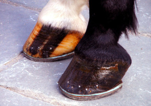 Horse Hoof Care Supplements - Horse Care