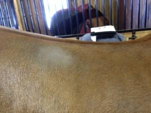 Horse Friction Hairs | Big Dee's Horse Tack