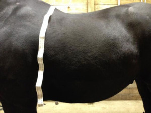 Saddle Fit | Big Dee's Horse Tack