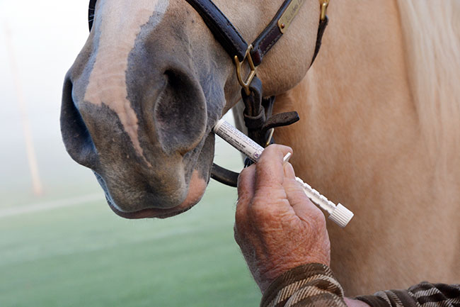 Deworming Horses 101 | Big Dee's Tack & Vet Supplies