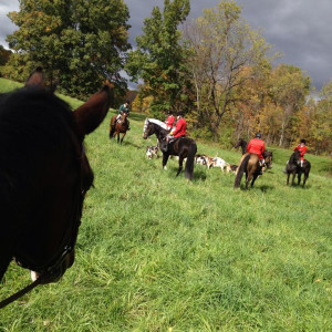 Riders perspective of Foxhunting