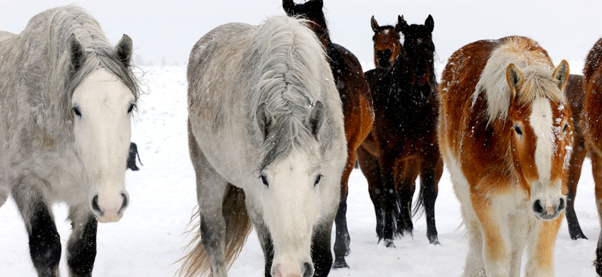 Horse Electrolytes in the Winter