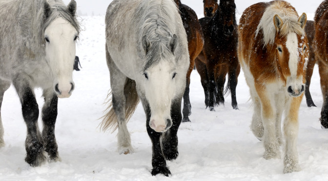 The importance of giving your horse electrolytes in the winter