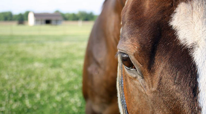 Multi-Vitamins for Horses