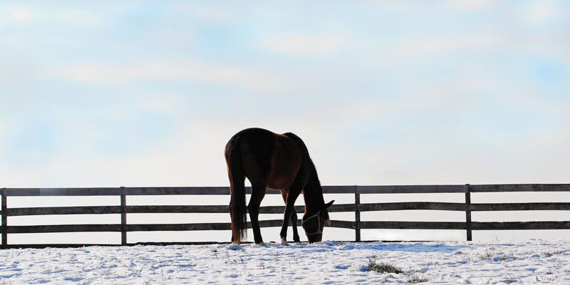 Big Dee's | Horse Supplements | Multi-Viitamins