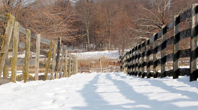 Layering Winter Clothes | Big Dee's Tack & Vet Supplies