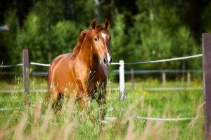 Spring Pasture | Big Dee's Tack & Vet Supplies