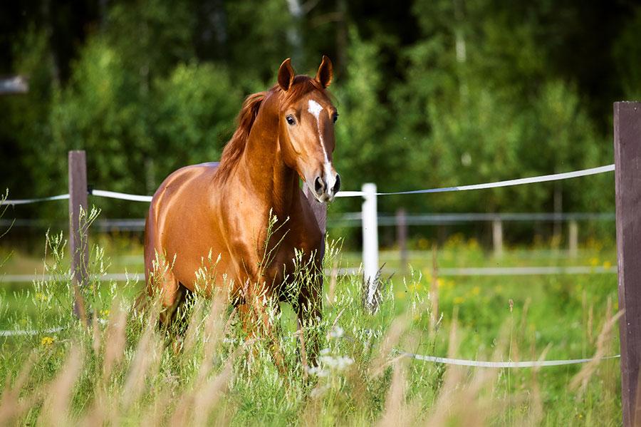 love horses pasture wallpaper - photo #17