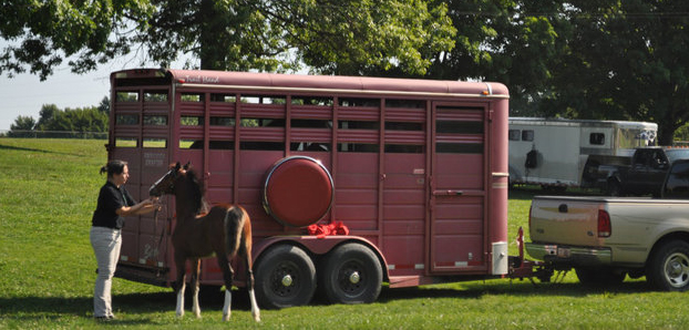 Horse Trailer Annual Maintenance and Safety Stock Up