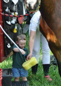 Water tank in horse trailer