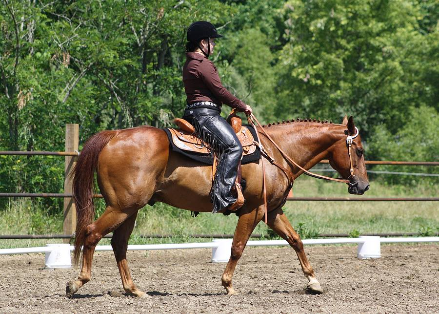 Big Dee's | Western Dressage