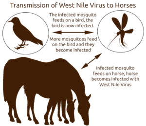 The Spread of West Nile Virus